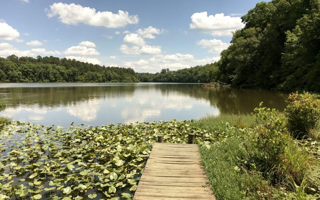 Bugs Lake North