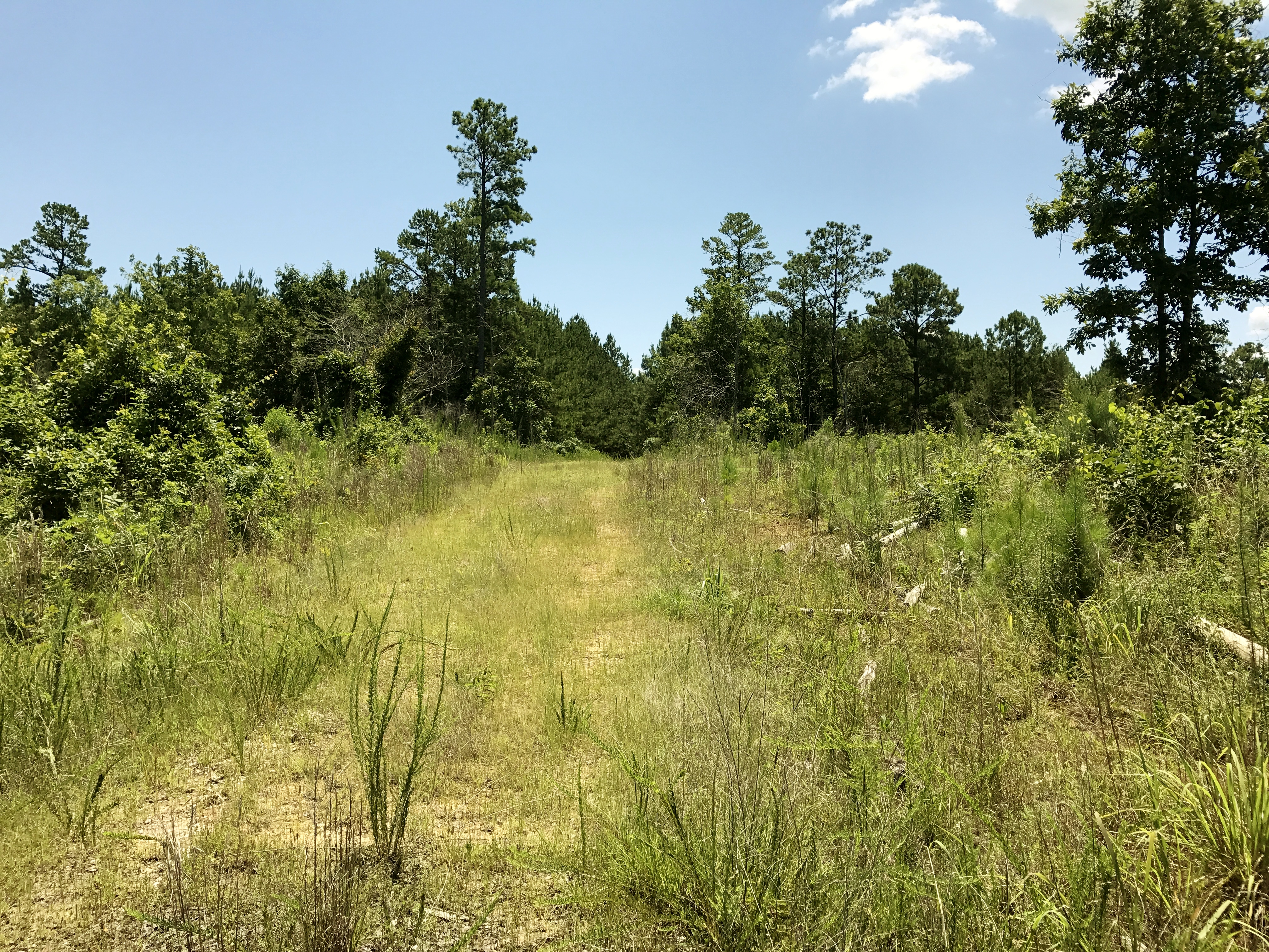 Luster Place Tract